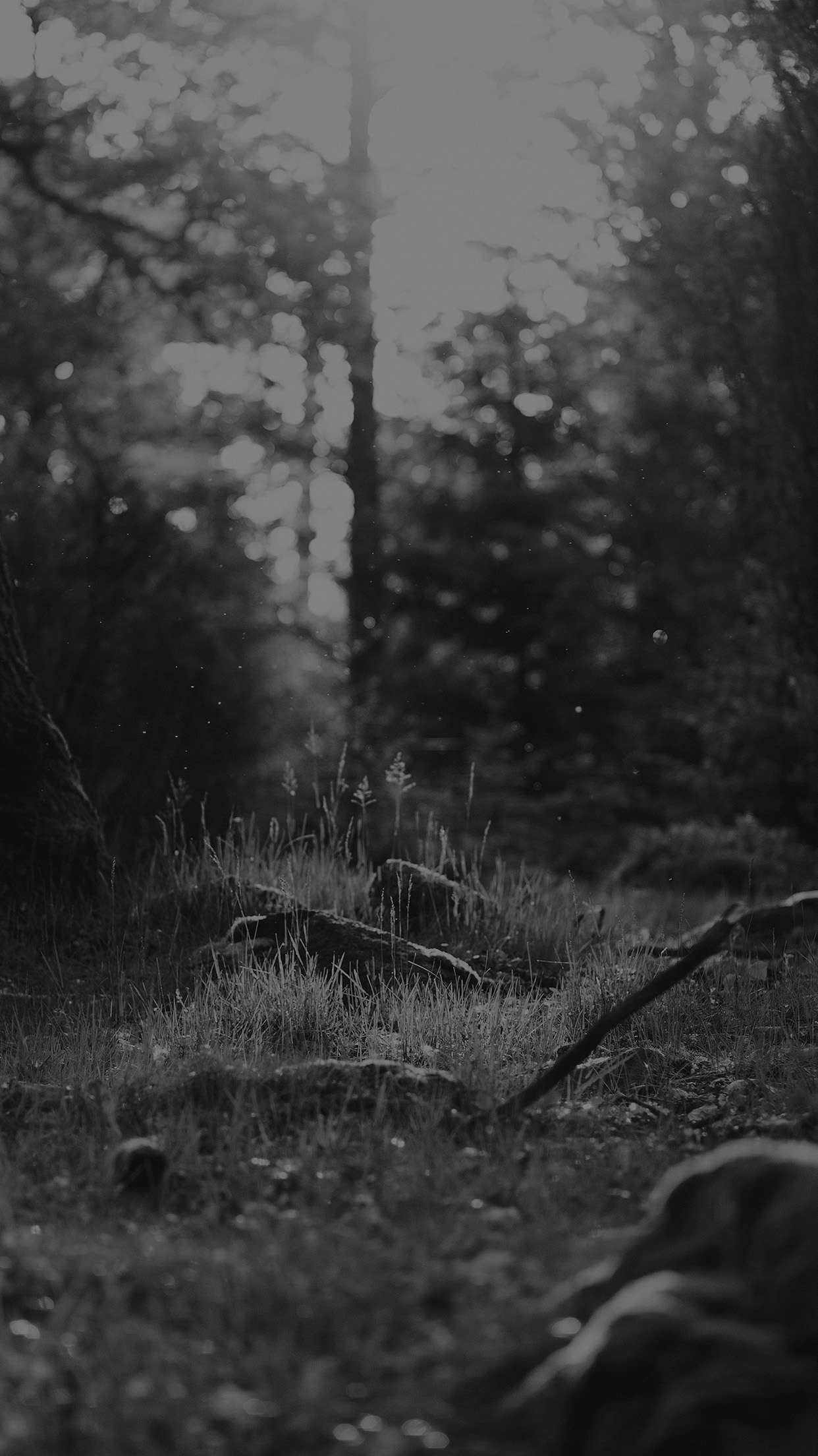 Free Download Black And White Forest Nature Eerie Android