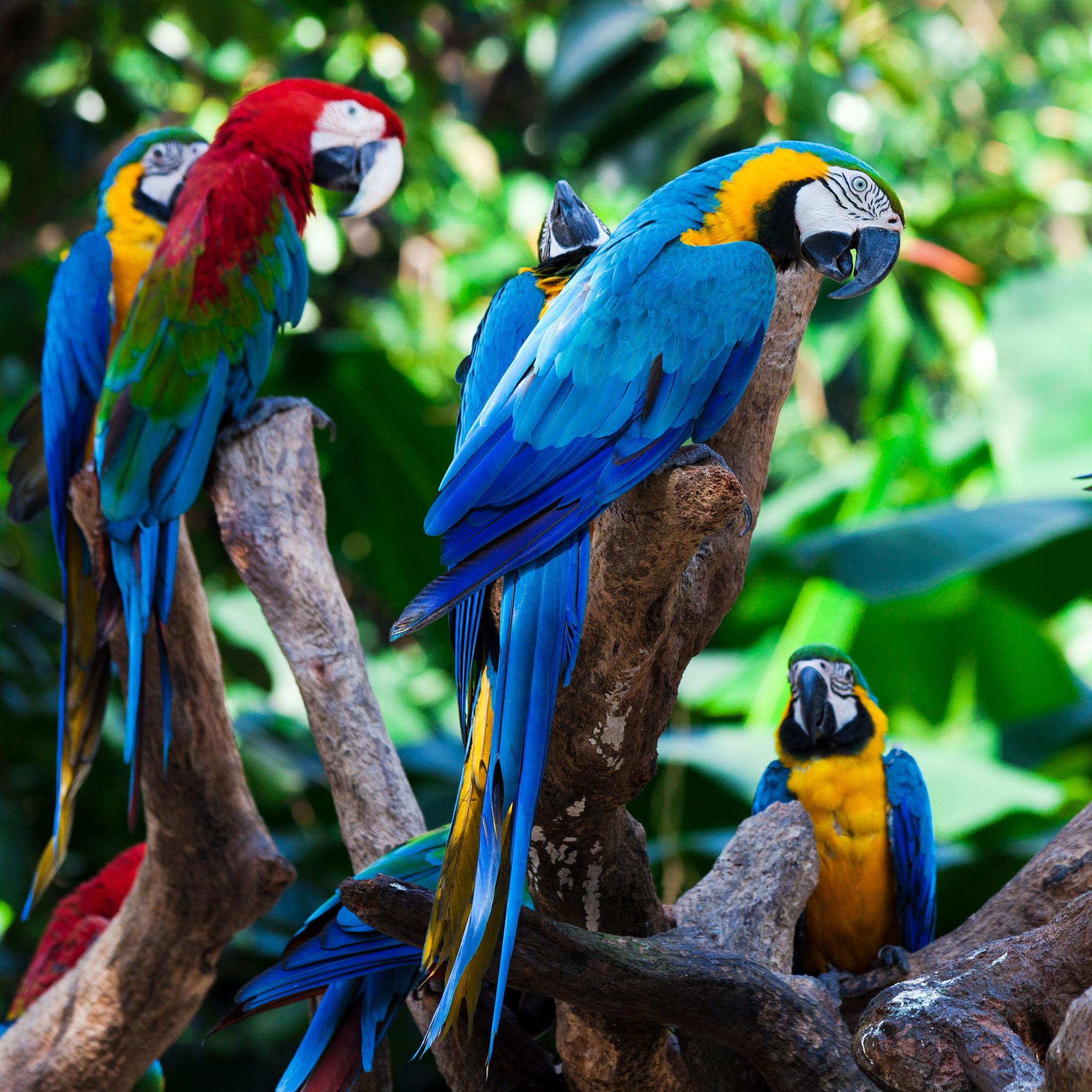 тропические птицы картинки разные века