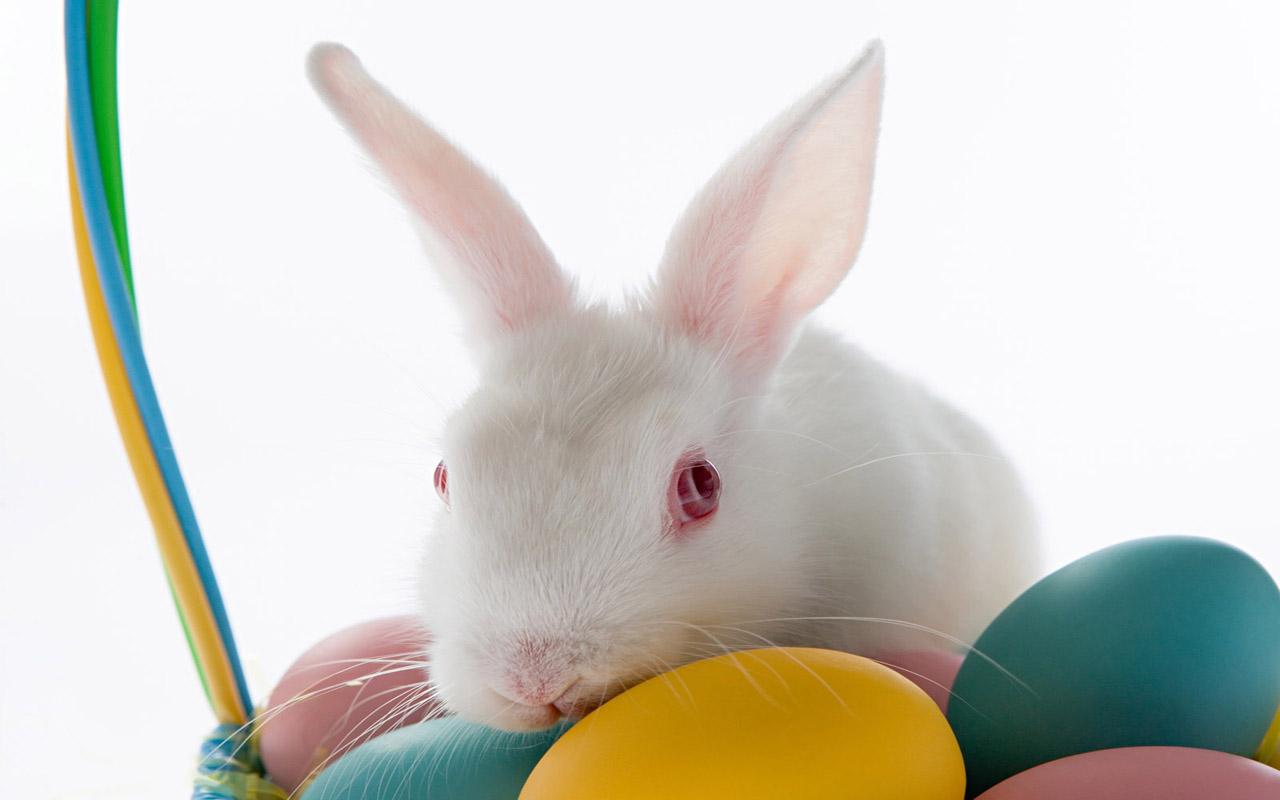 cute easter bunny wallpaper wallpapersafari
