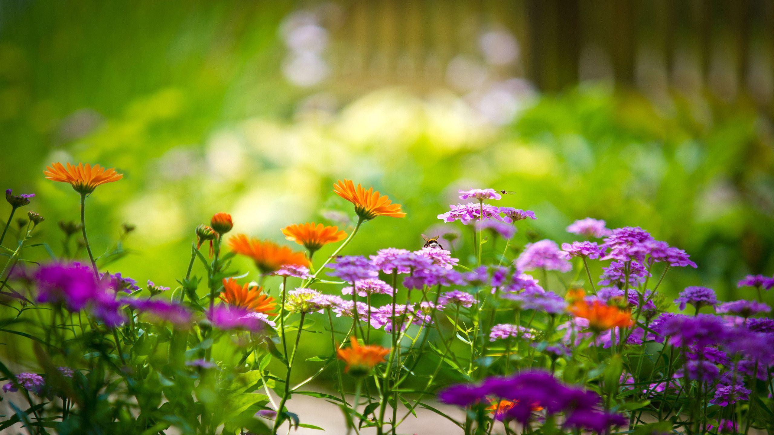 HD Flower Garden Wallpaper 19201080 Flower Garden Backgrounds 48 2560x1440