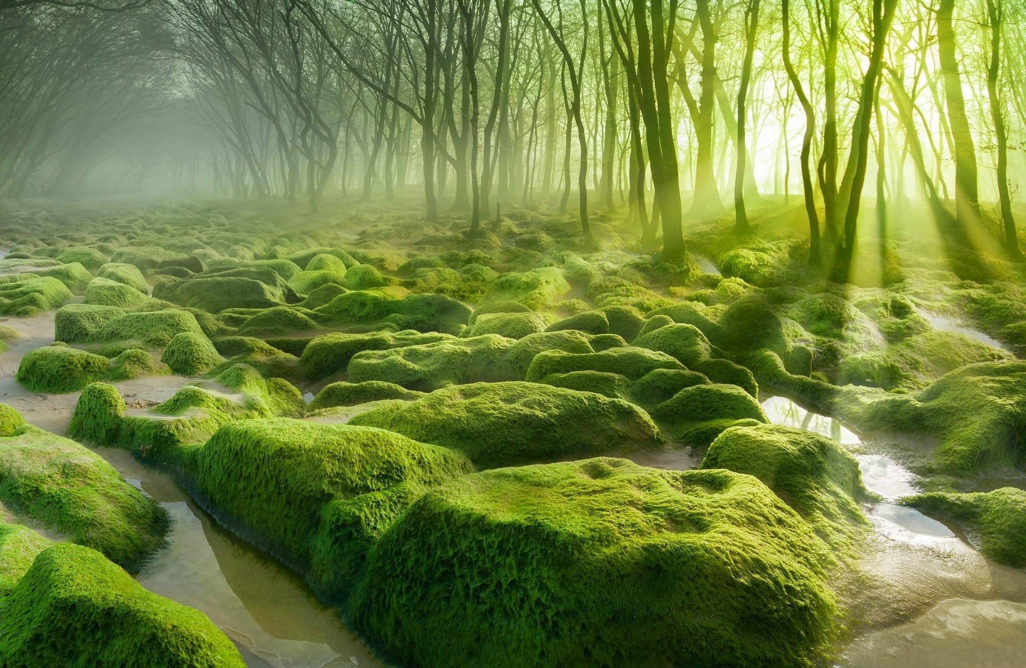 Trees Swamp Fresh Background Images Morninglandscape 2048x1333