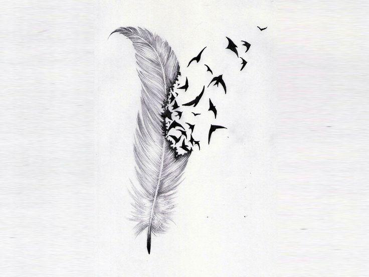 Bird Feather Wallpaper Wallpapersafari
