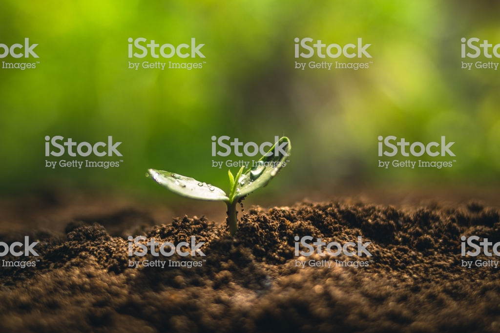 Fresh Sapling Young Plant On The Soil Nature Background Stock 1024x682