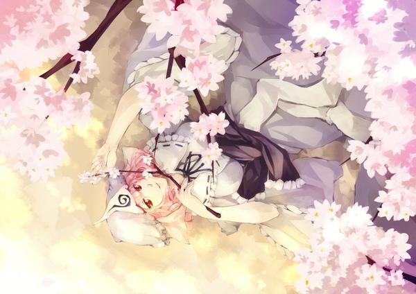 anime cherry blossom wallpaper wallpapersafari
