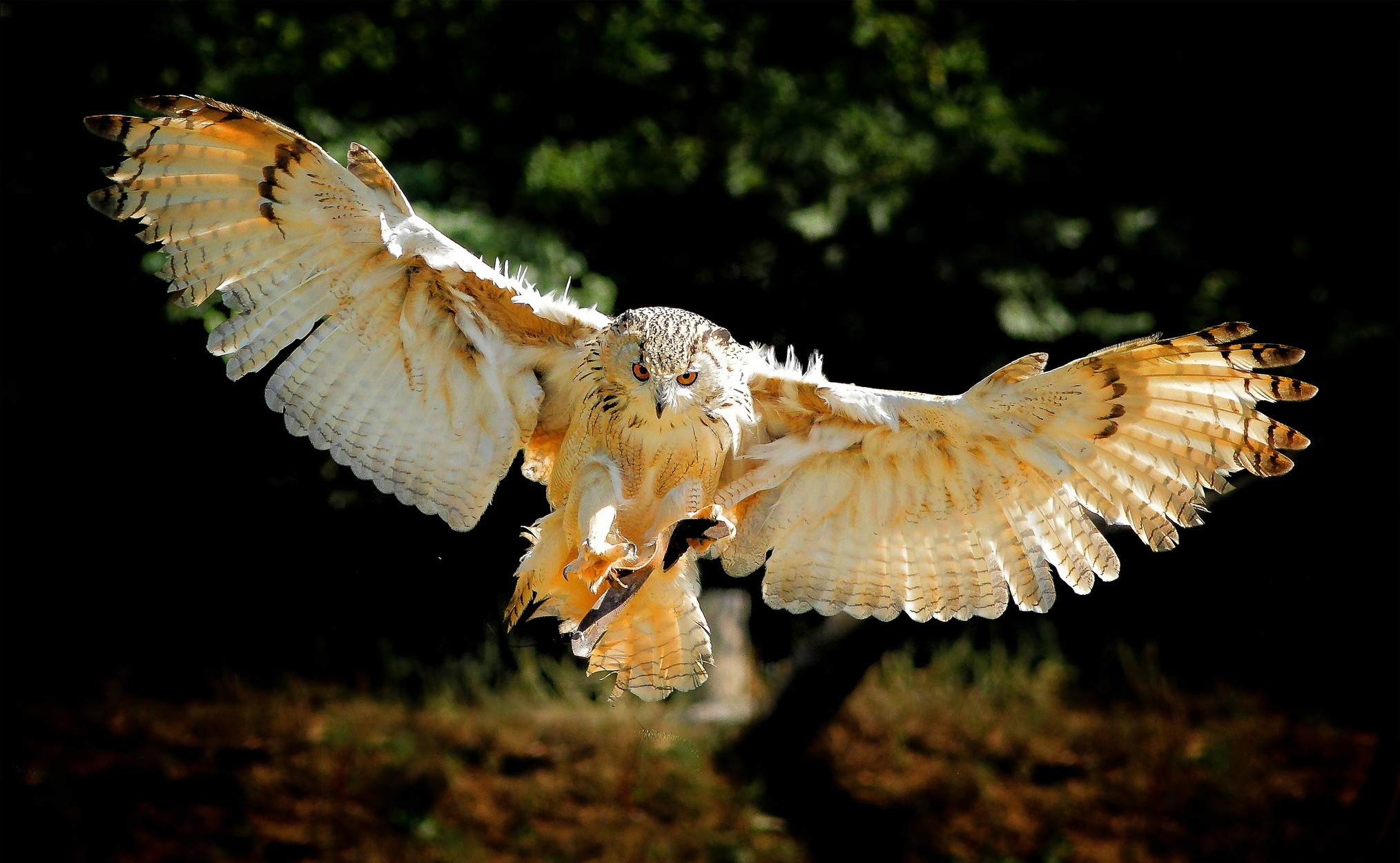 Owl bird flying wings wallpaper 2028x1249 196024 WallpaperUP 2028x1249