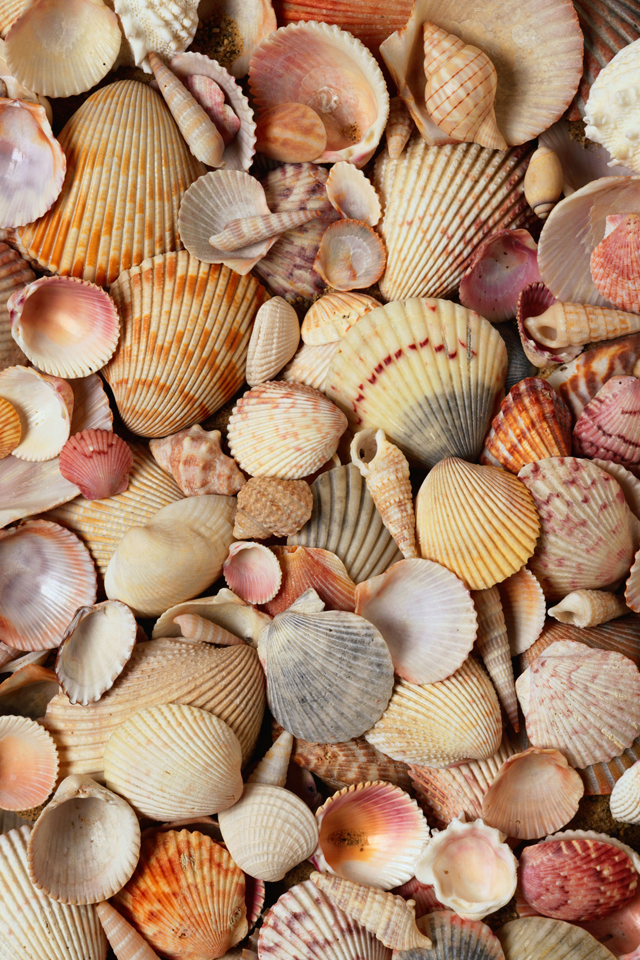 iphone ios 7 wallpaper tumblr for ipad wow Sea shells 640x960