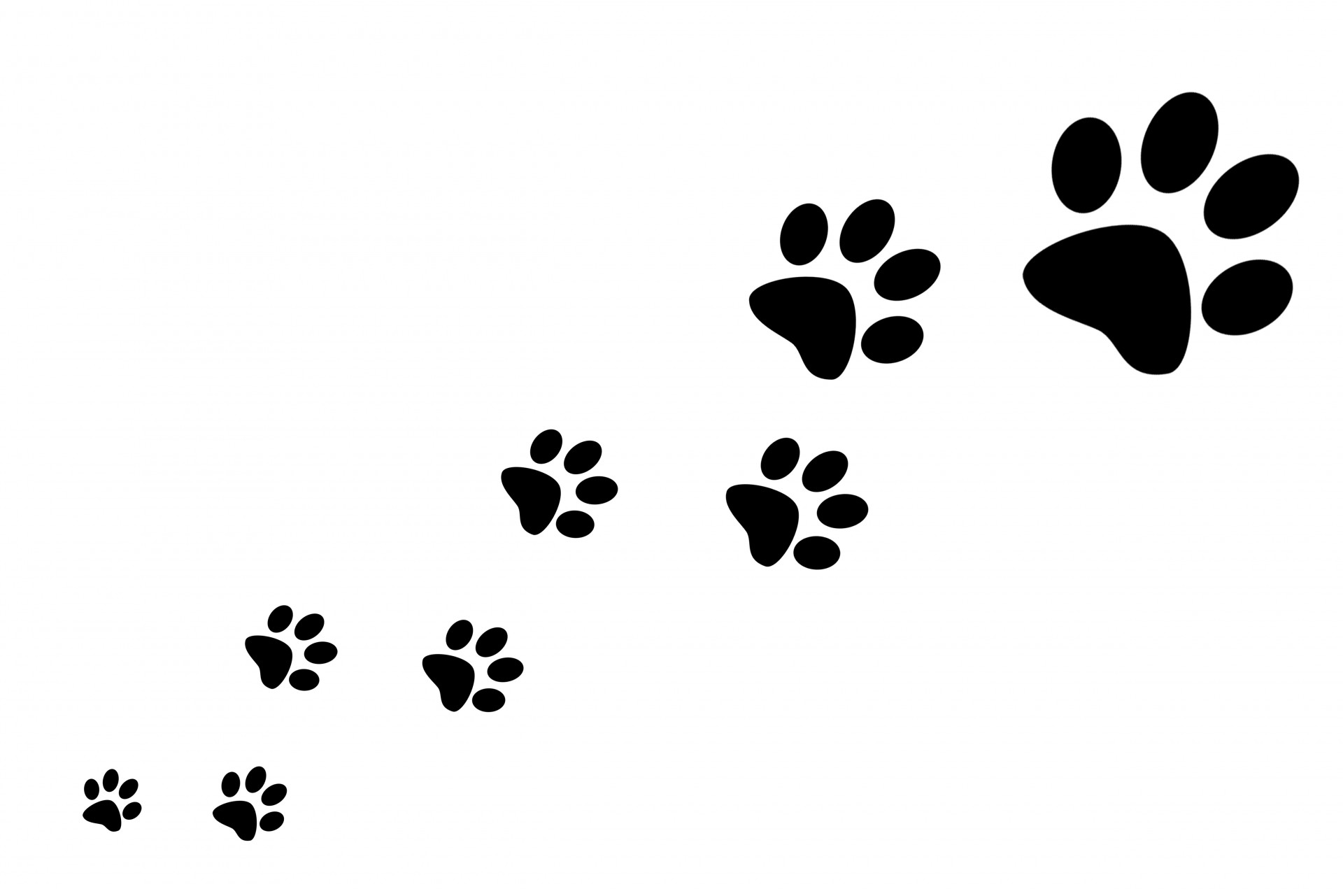 Free Download Paw Prints Stock Photo Hd Public Domain Pictures 1920x1271 For Your Desktop Mobile Tablet Explore 67 Paw Print Wallpaper Dog Paw Print Wallpaper Border Paw Print Wallpaper For commercial and personal projects. wallpapersafari