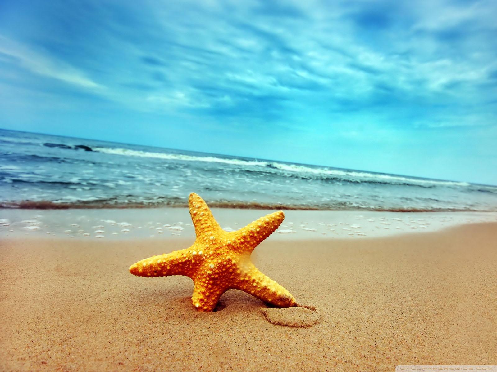 43] Beach and Starfish Wallpaper on WallpaperSafari 1600x1200
