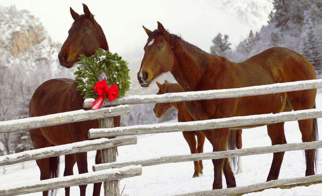 christmas horses wallpaper for computer wallpapersafari