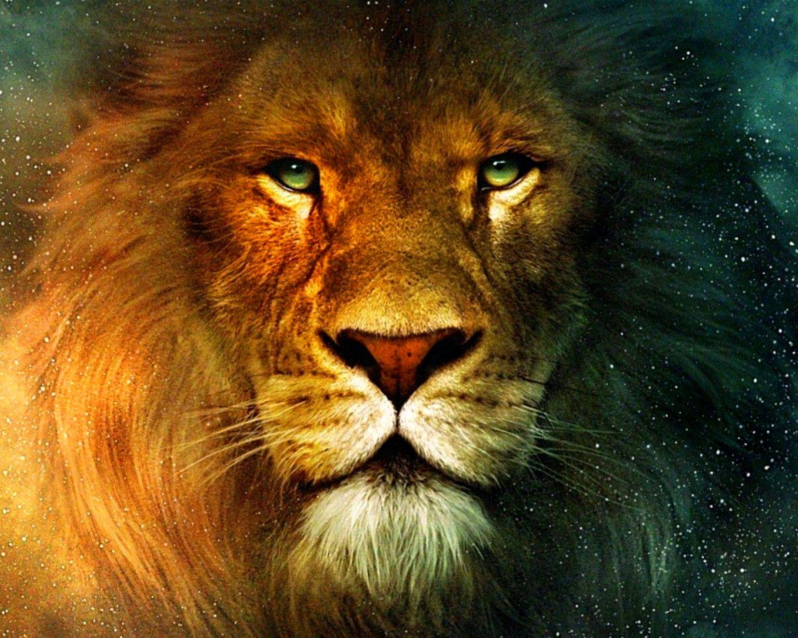Tags Aslan Lion 1600x1280 wallpaper1600X1280 wallpaper screensaver 1600x1280