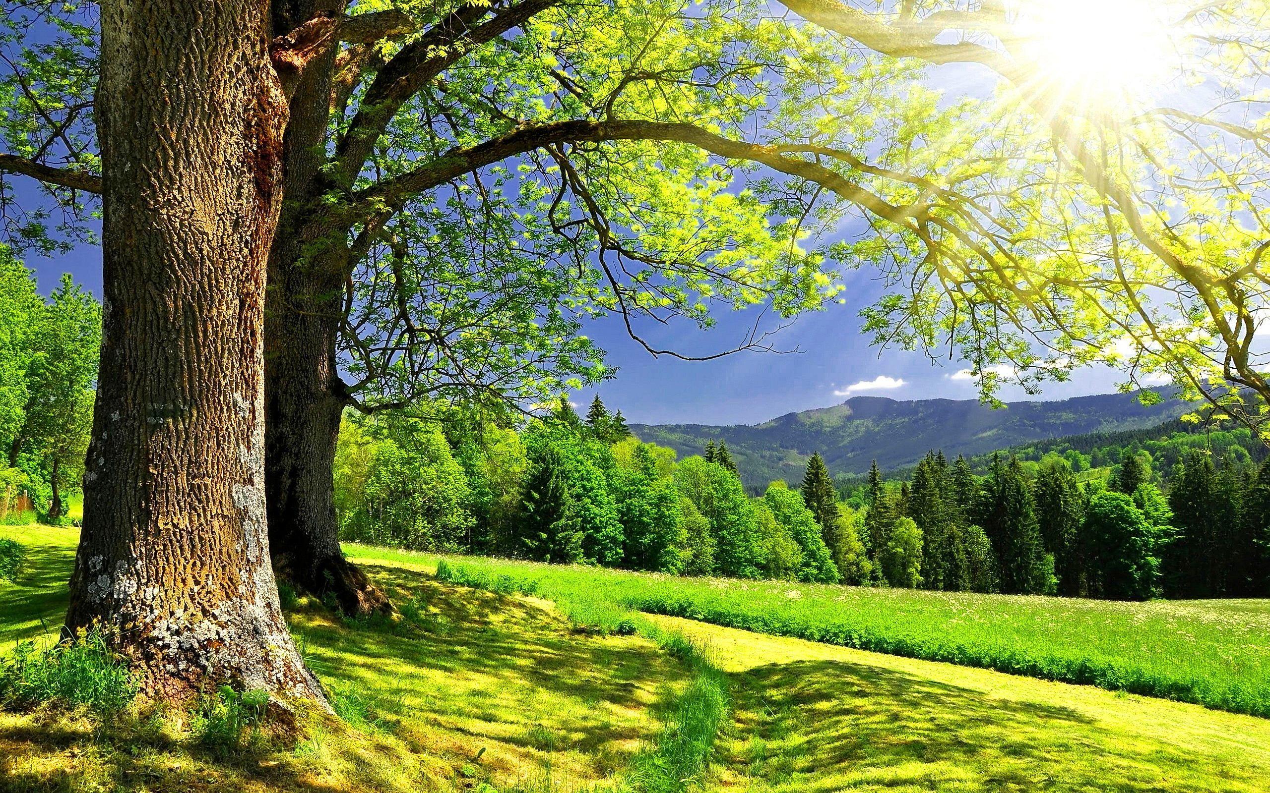 Sunny Summer Day 7025851 Summer Landscape wallpaper Nature 2560x1600