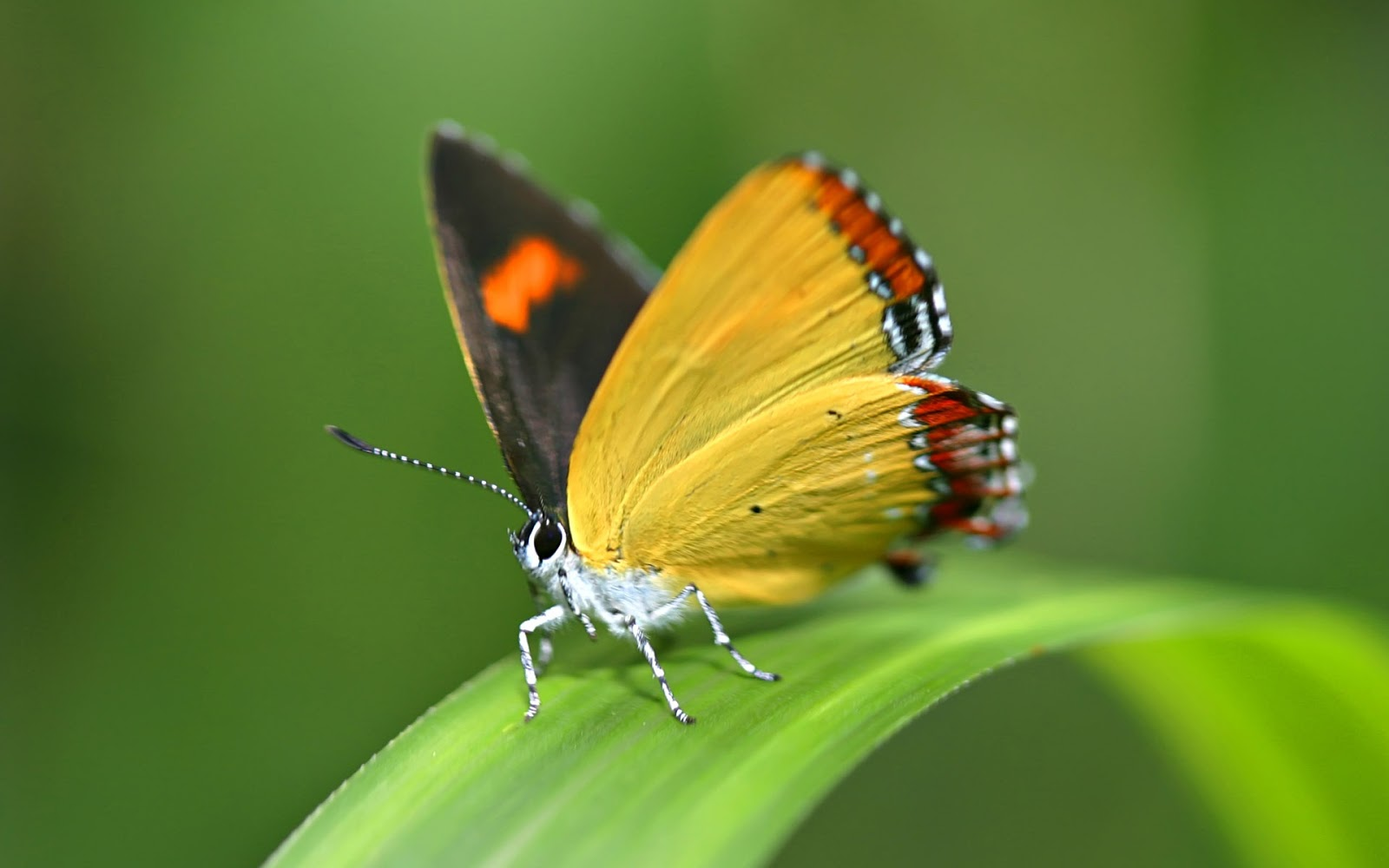 Beautiful Wallpapers For Desktop Beautiful HD Butterfly wallpapers 1600x1000