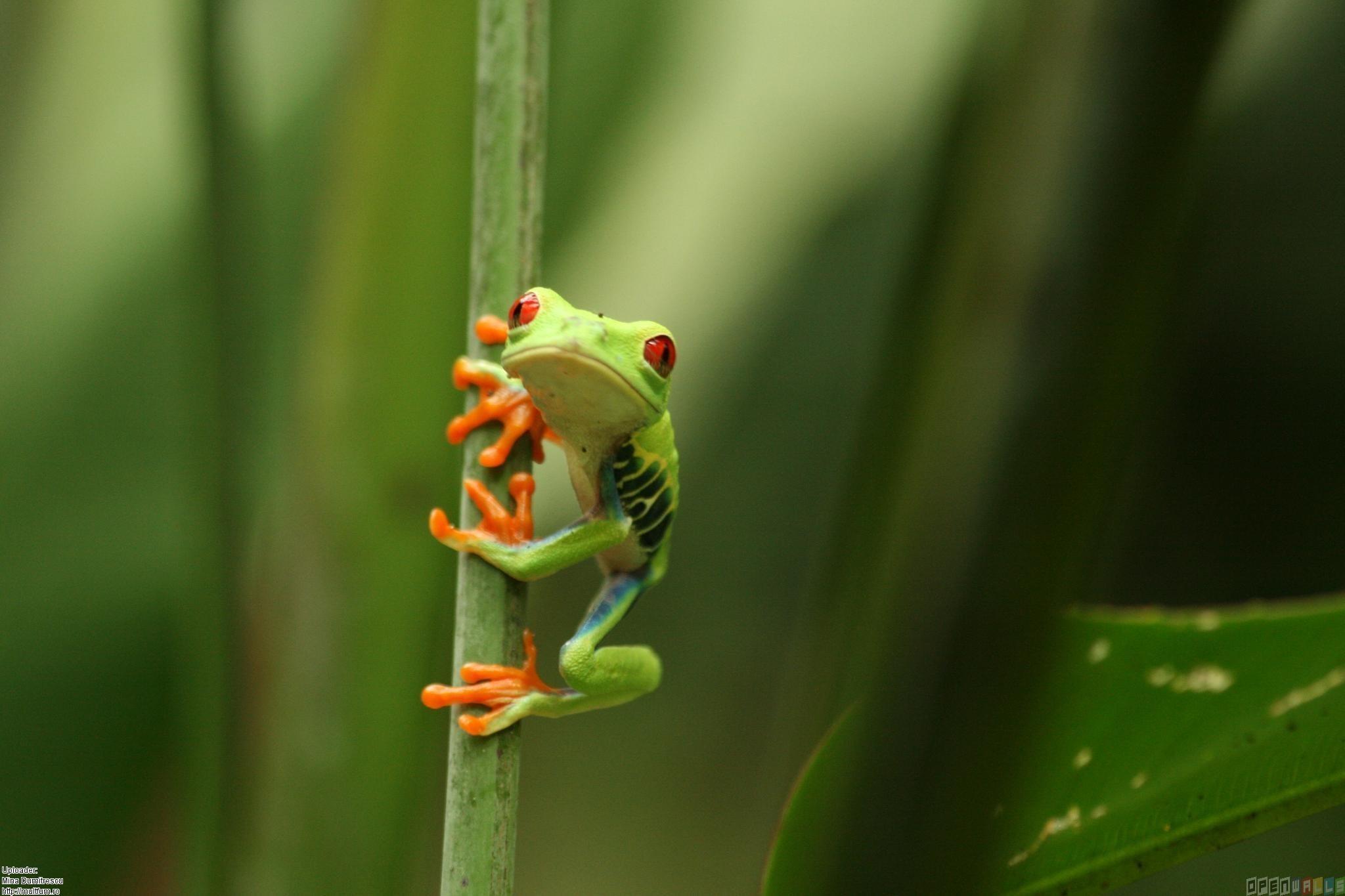 Cute Frog HD Wallpaper Wallpaper WallpaperMinecom 2048x1365