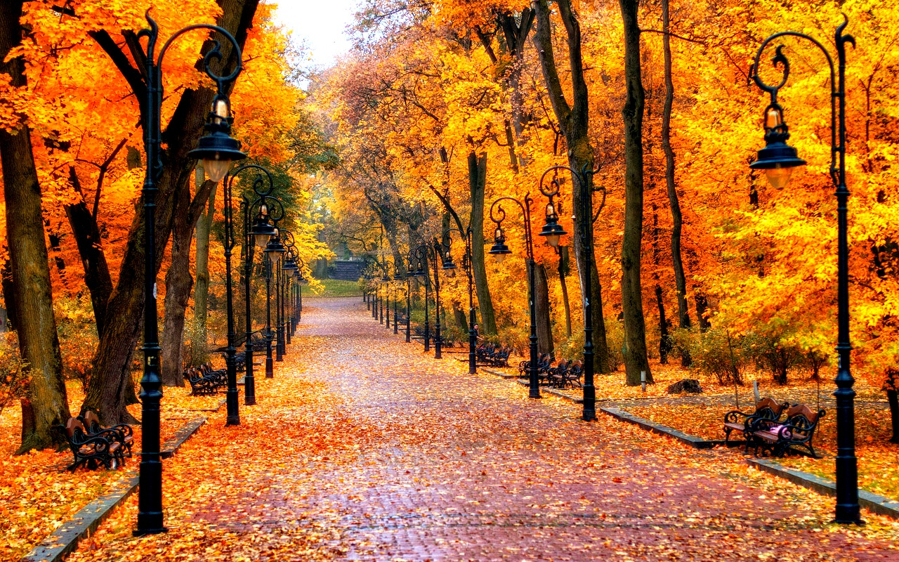 Autumn images Autumn Wallpaper HD wallpaper and background 1280x800