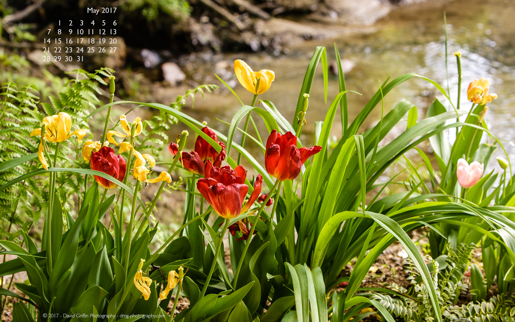 May 2017 Wallpaper David Griffin Photography 1680x1050