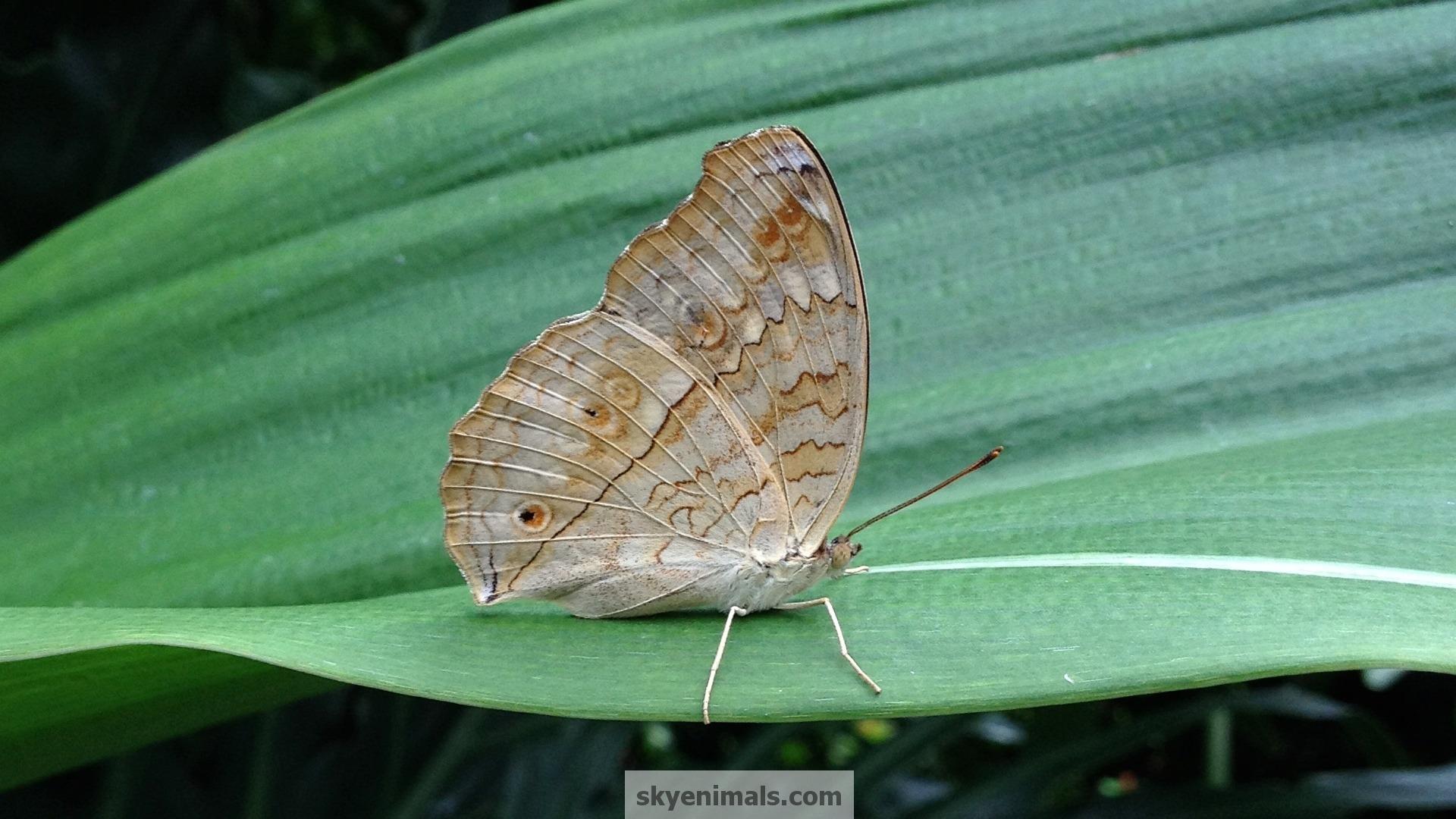 Butterfly Eye Butterflies Cat wallpapers HD   418409 1920x1080