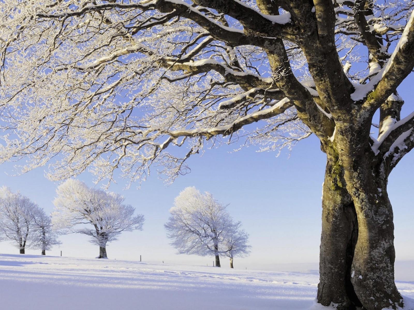 Snowy Black Forest Germany Wallpaper HD Image WallpaperGeeks 1600x1200