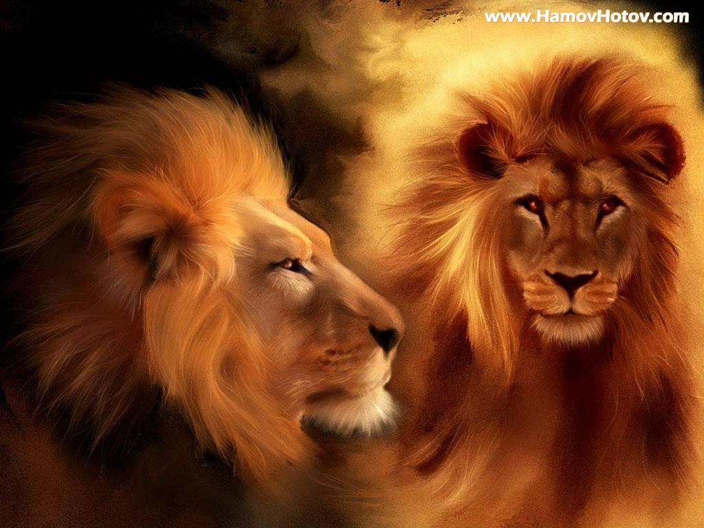 White Lion Roar Wallpaper 1024x768