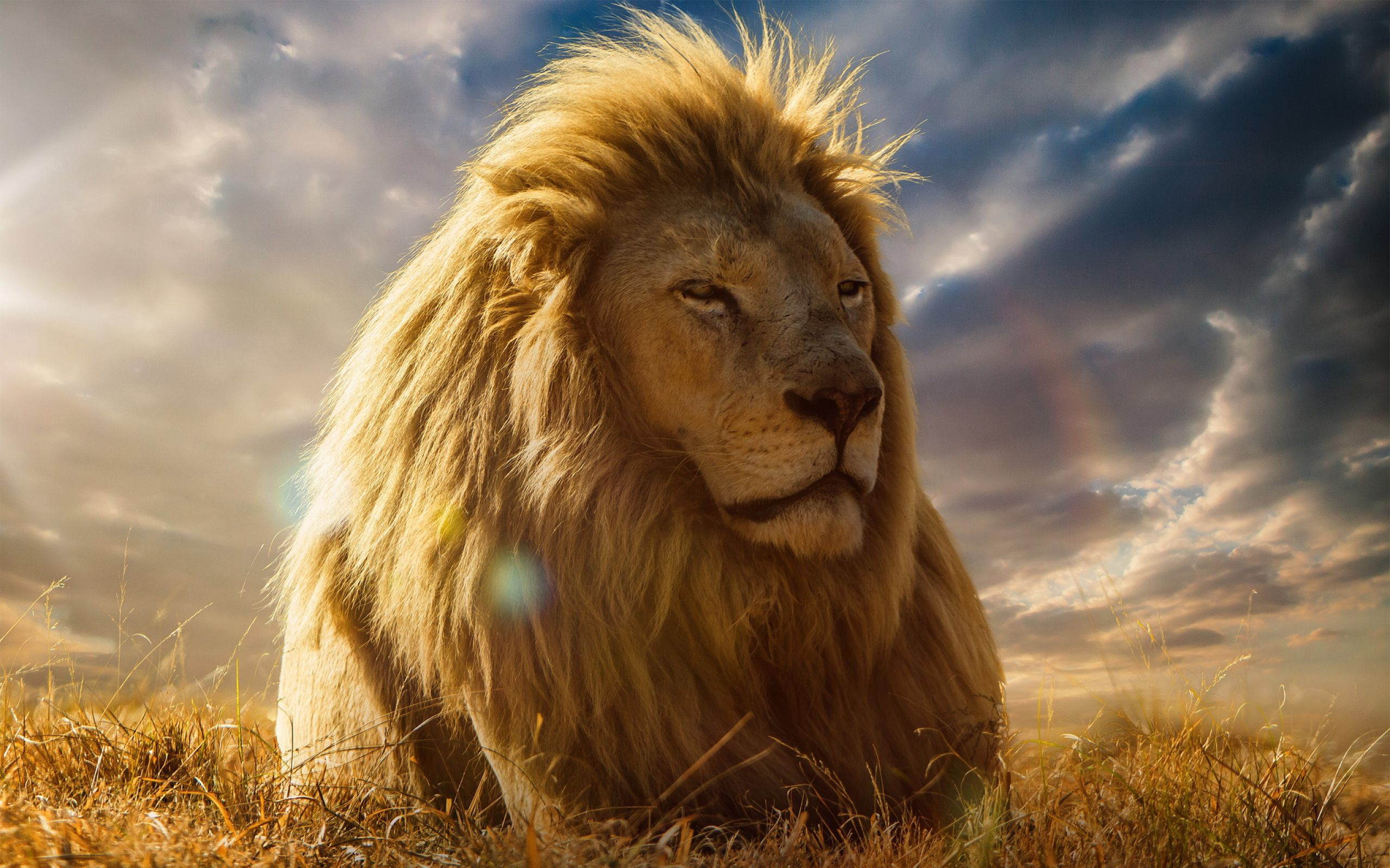 Big Lion Face HD Wallpaper Download For Desktop amp Mobile 2560x1600