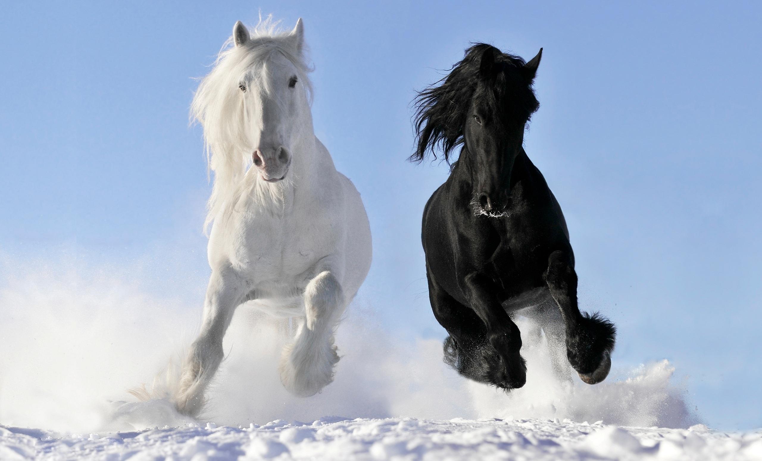 Horse winter snow wallpaper 2560x1550 148580 WallpaperUP 2560x1550