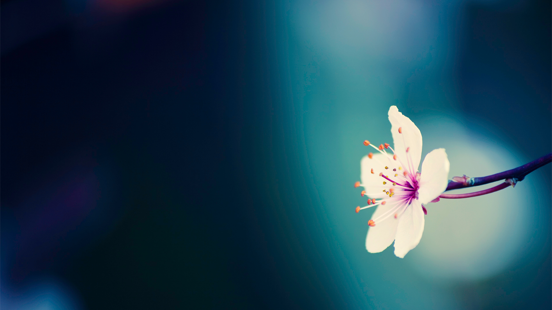 Spring Flower Background   Wallpaper 260 1920x1080