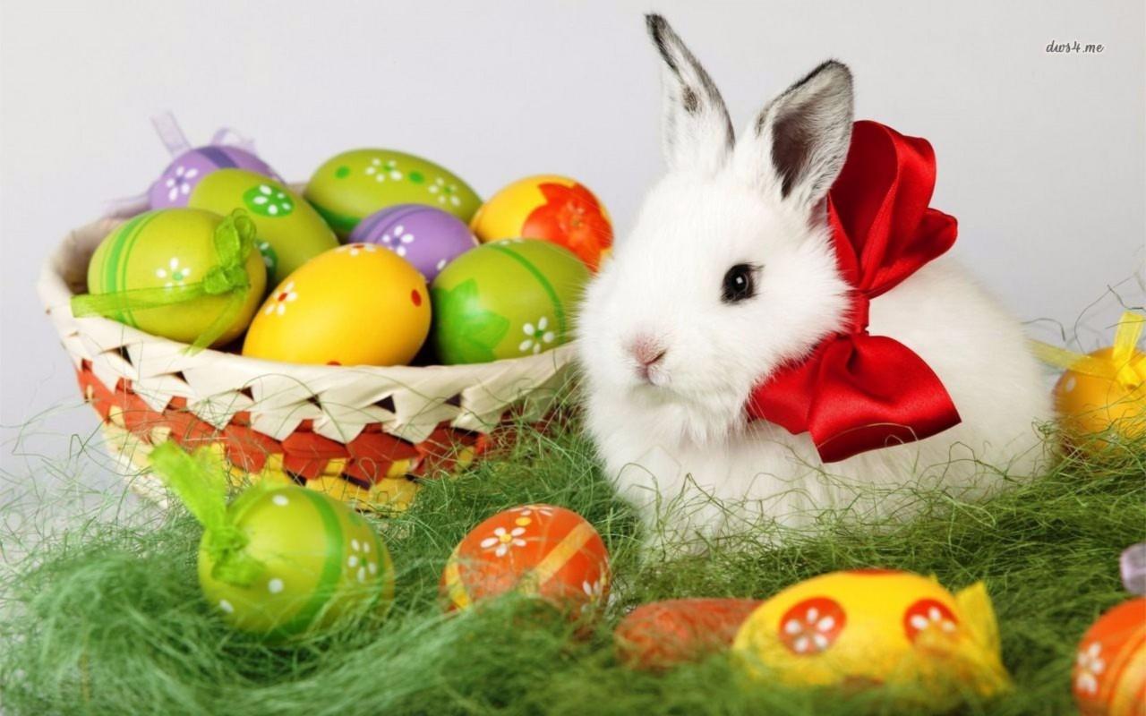 Bunny Rabbit 2016 Easter 4K Wallpapers 4K Wallpaper 1280x800