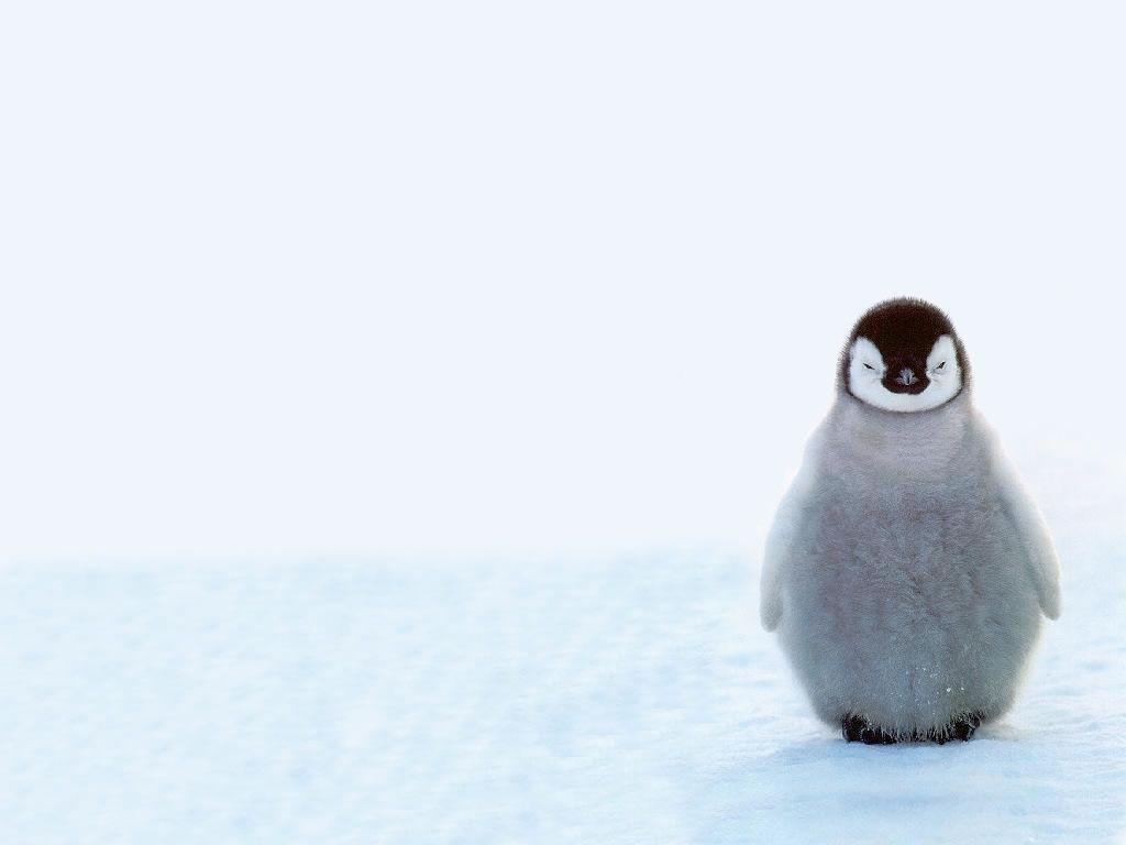Cute Penguin Backgrounds 1024x768