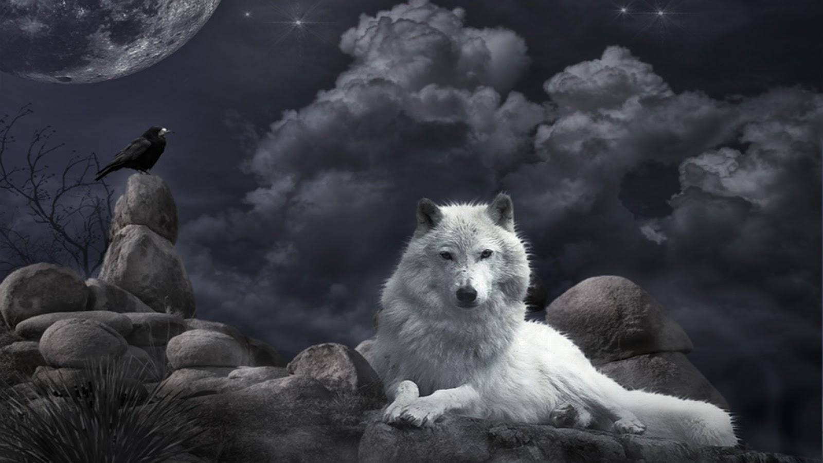 Beautiful Wallpapers Beautiful Wolf Wallpapers 1600x900