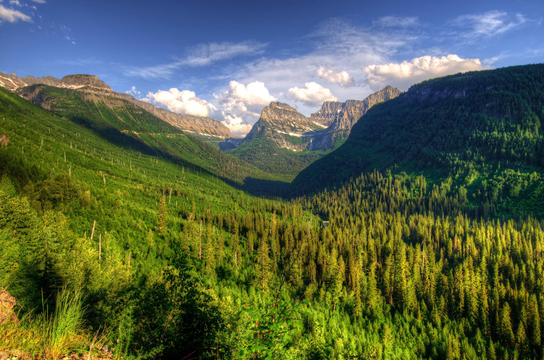 USA Glacier Montana Fir Nature wallpaper 3000x1989 349180 3000x1989