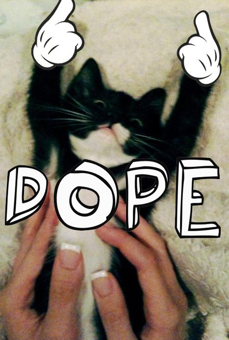 Dope kitty kitten 467x693