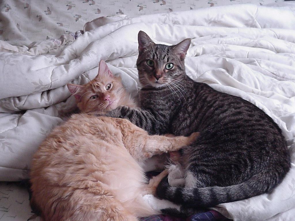 Cat Wallpaper   Cats Wallpaper 9901918 1024x768
