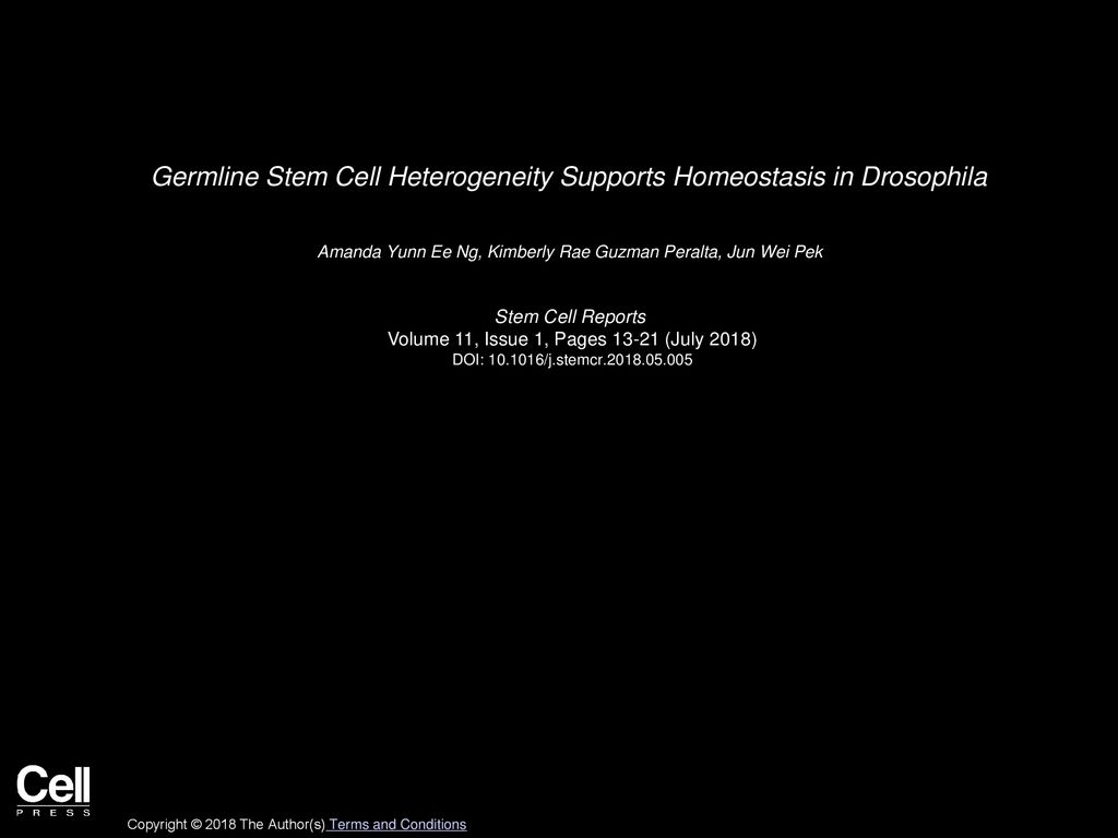 Germline Stem Cell Heterogeneity Supports Homeostasis in 1024x768