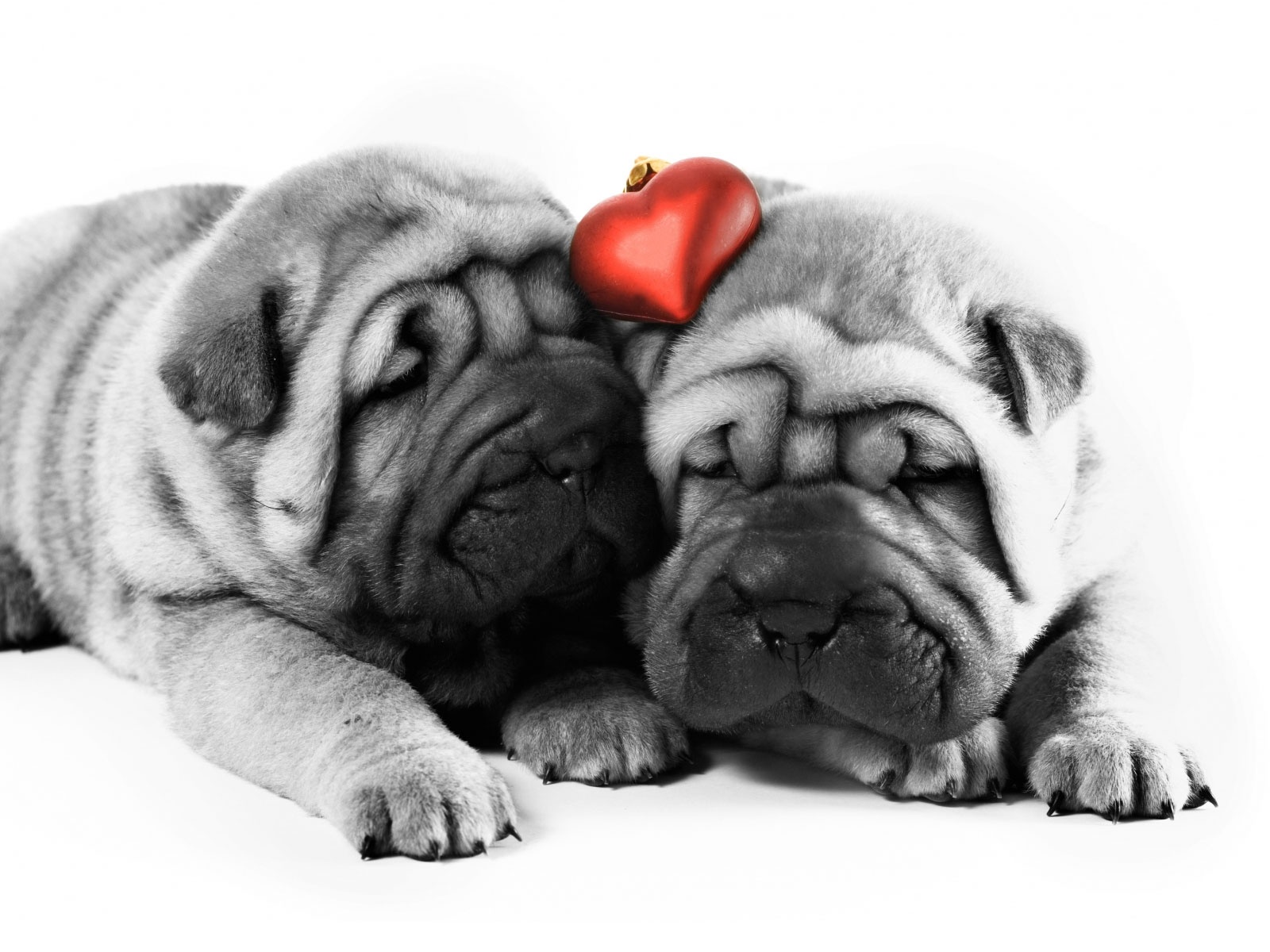I Love Dogs Wallpaper - WallpaperSafari