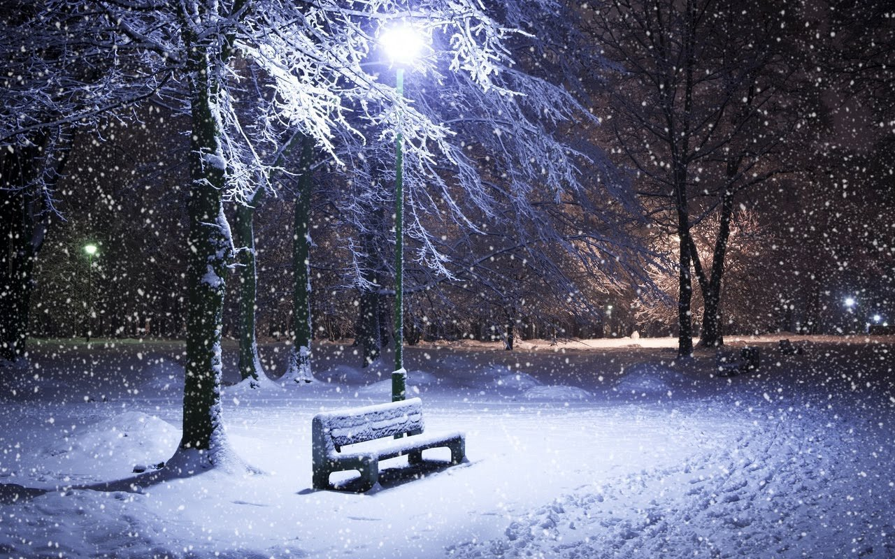 Amazing Winter Night   Frozen Tree in Winter Hd Wallpaper 1280x800
