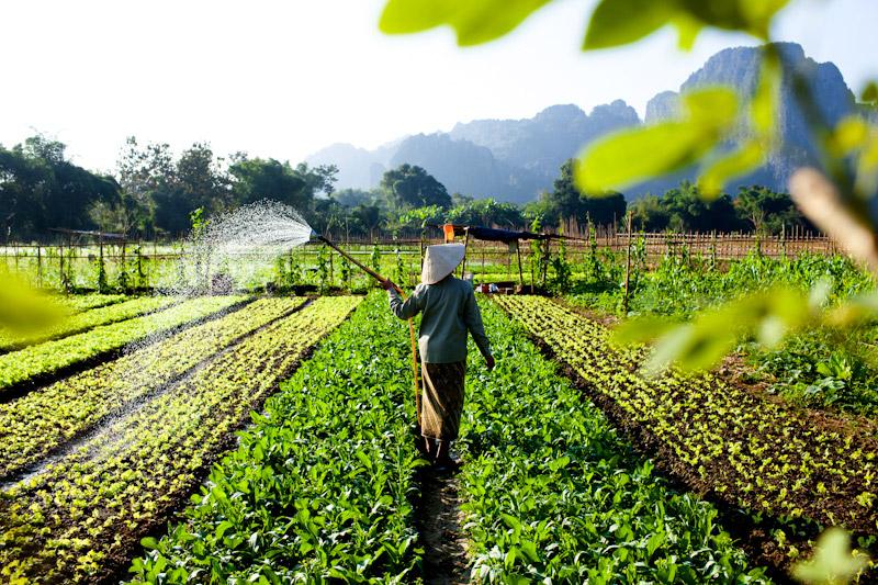 Vietnam Travel Photographer Vietnam Documentary Photographer Ehrin 800x533