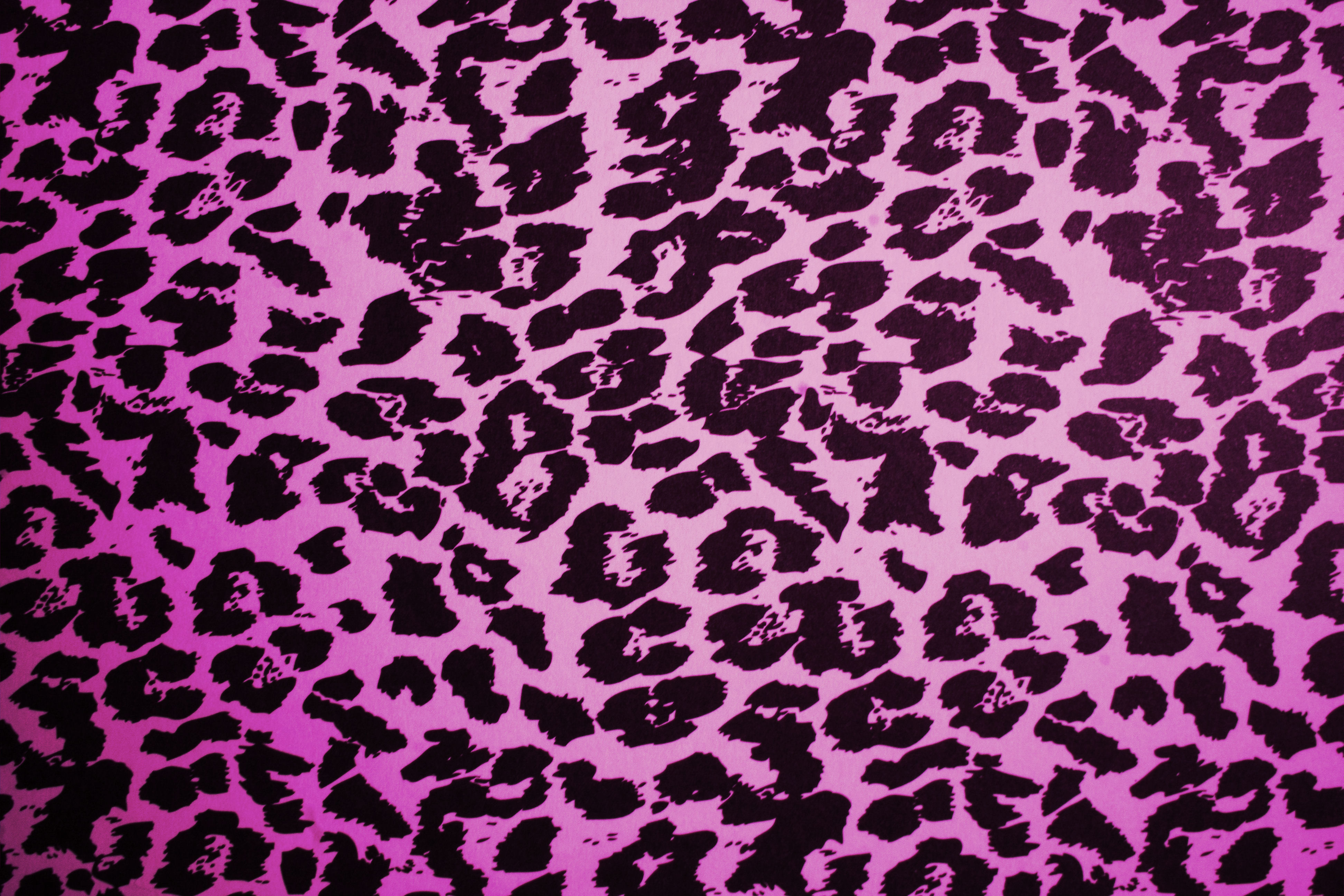 Animal Print Link Leopard Skin Image High Resolution in HD Wallpapers 3888x2592