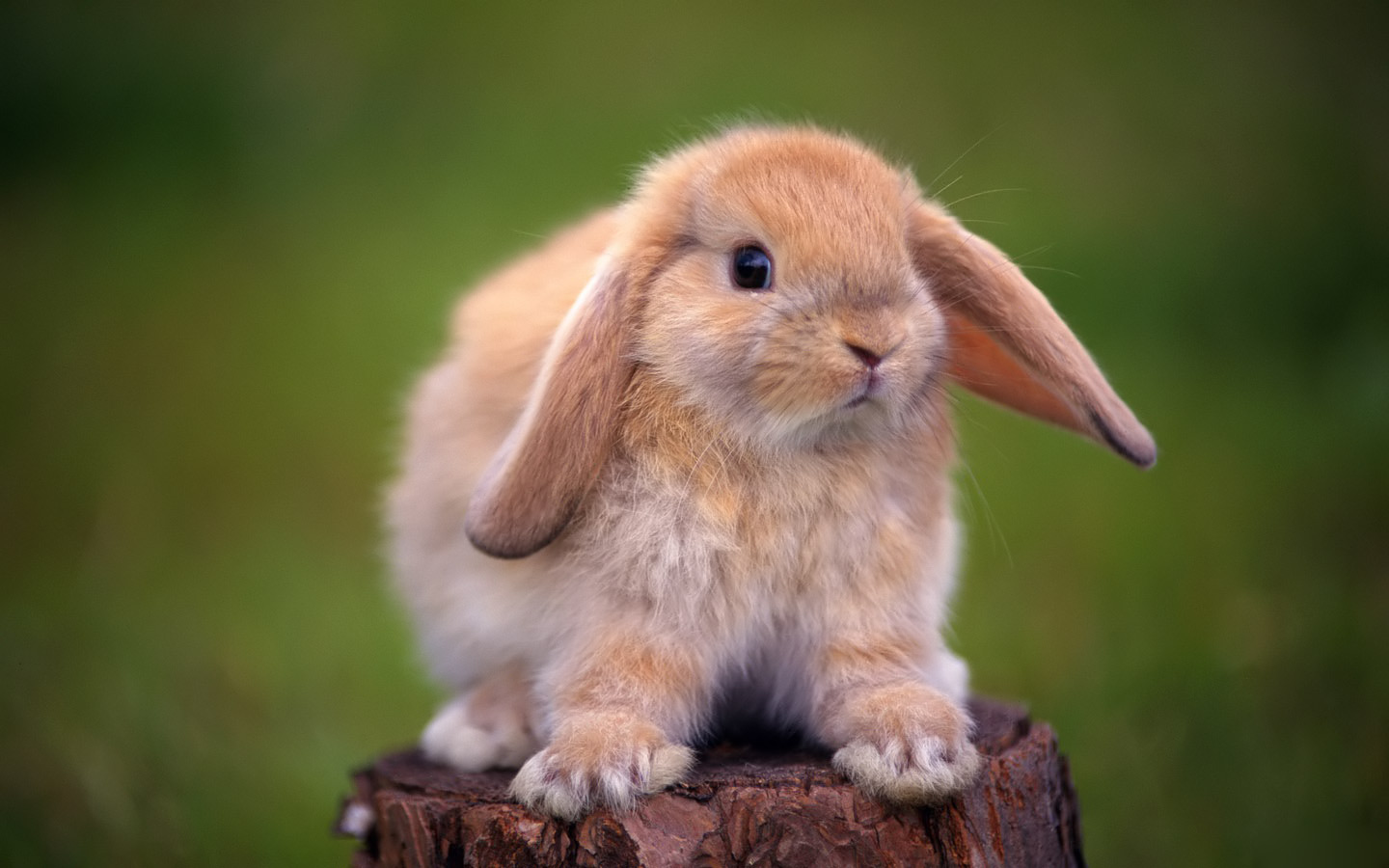 72 Free Bunny Wallpapers On Wallpapersafari