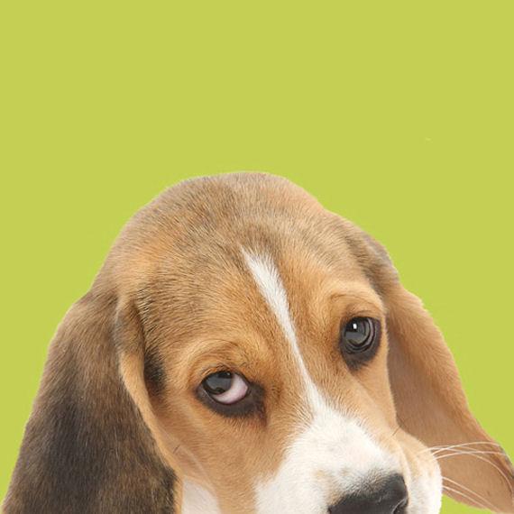 [47+] Beagle Wallpaper Border On WallpaperSafari