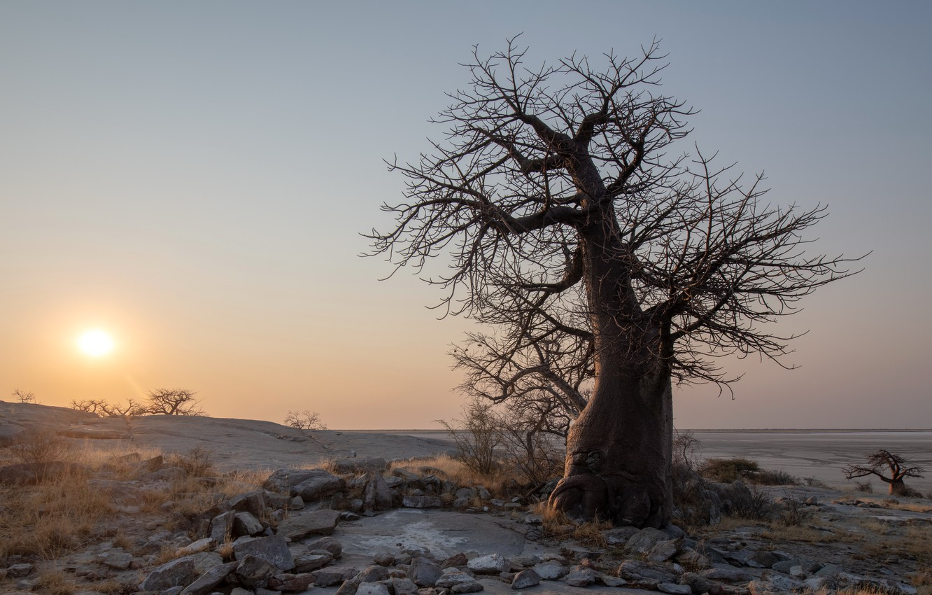 Wallpaper Sunset botswana Kubu Island boabab images for desktop 1332x850