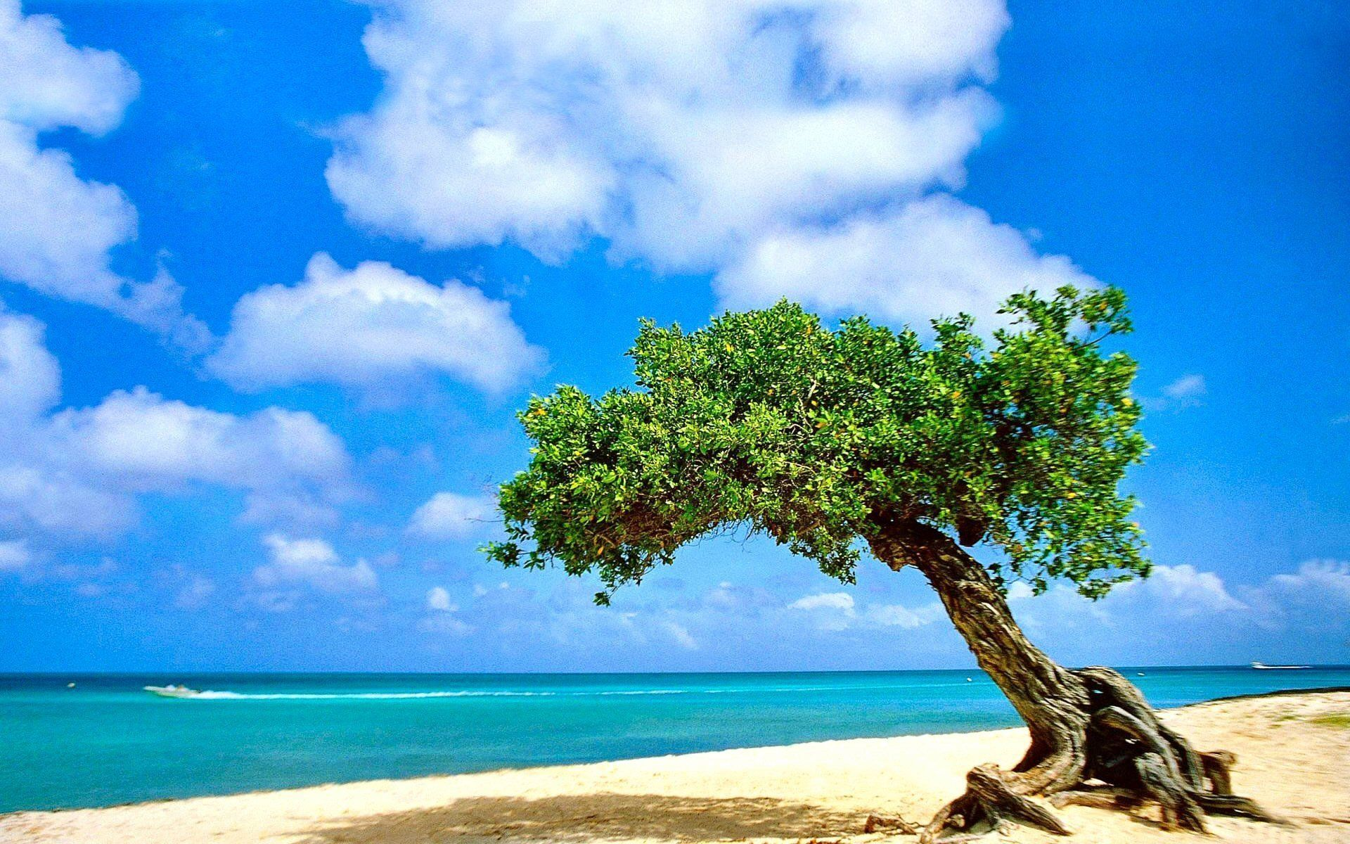 65 Aruba Beachfront Scene Desktop Wallpapers   Download at 1920x1200