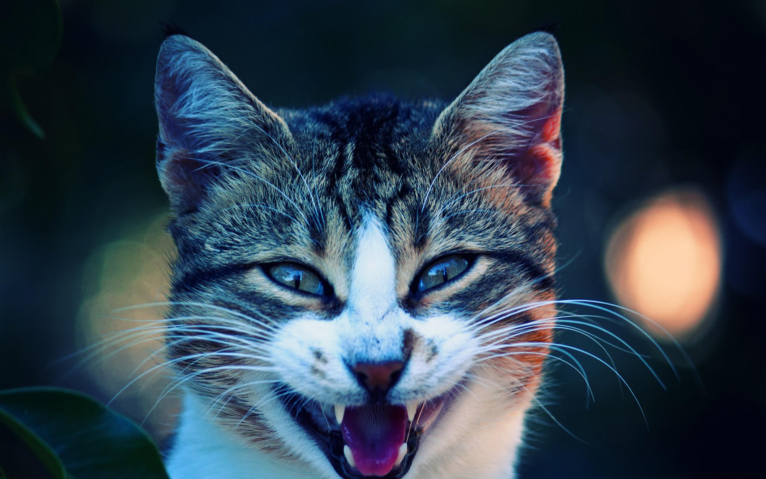 Cool Cat Hd Wallpaper Wallpapersafari