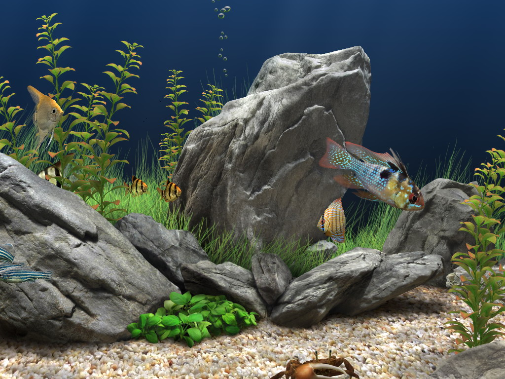 Awesome HD Fish Tank Wallpapers - WallpaperSafari