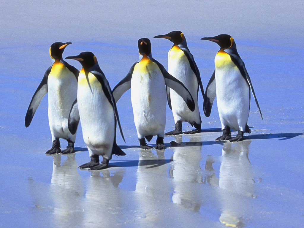 Penguin Desktop Screensavers 1024x768