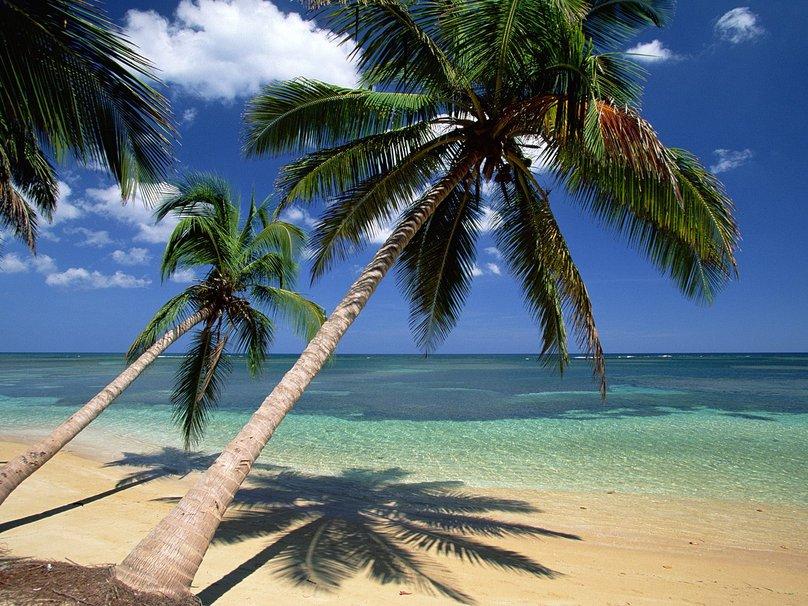 Palm trees dominican republic wallpaper   ForWallpapercom 808x606