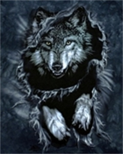 wolf phone wallpaper by dan 2 480x600