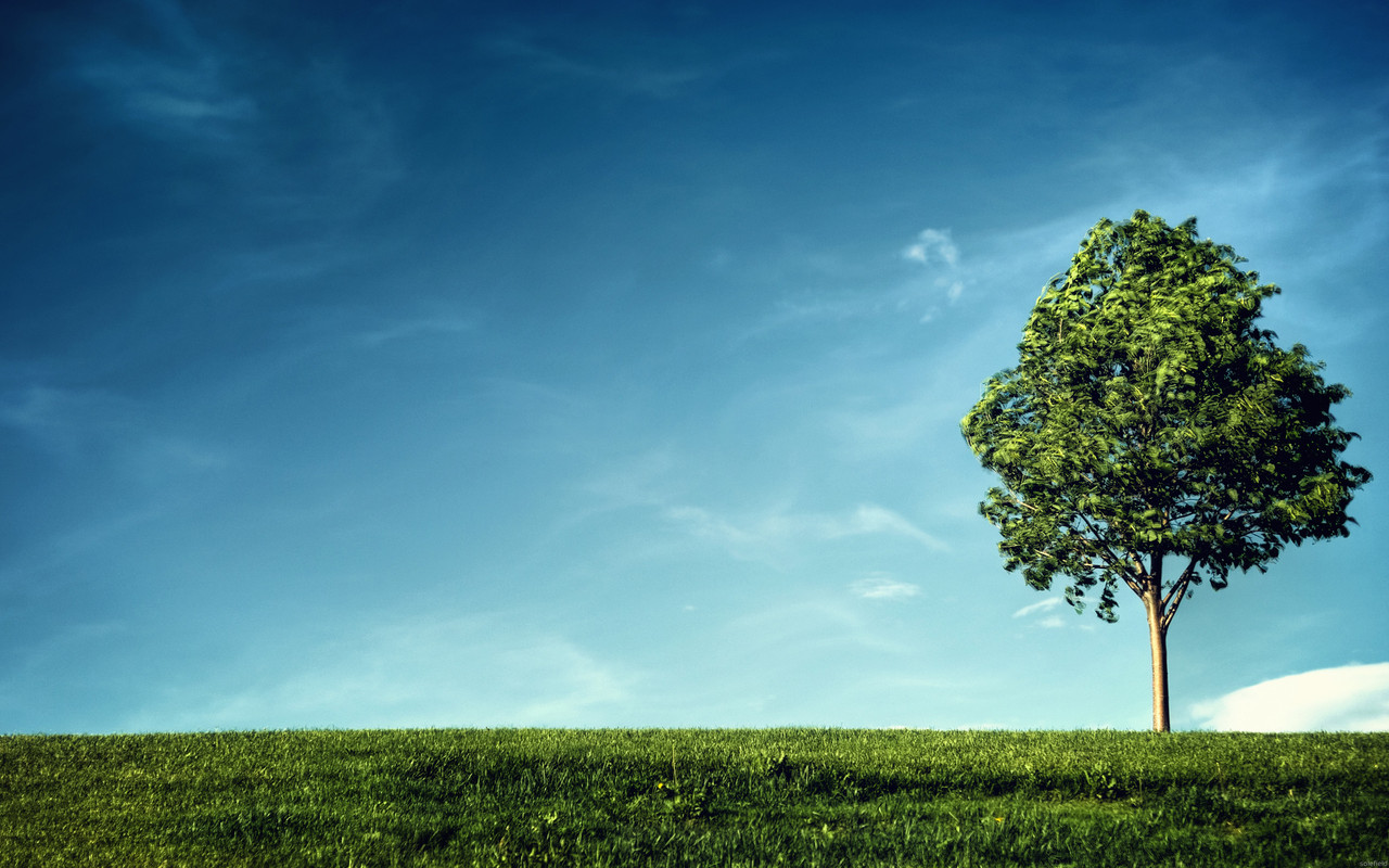 Tree HD Asus Google Nexus 7 Wallpapers to your mobile phone or tablet 1280x800