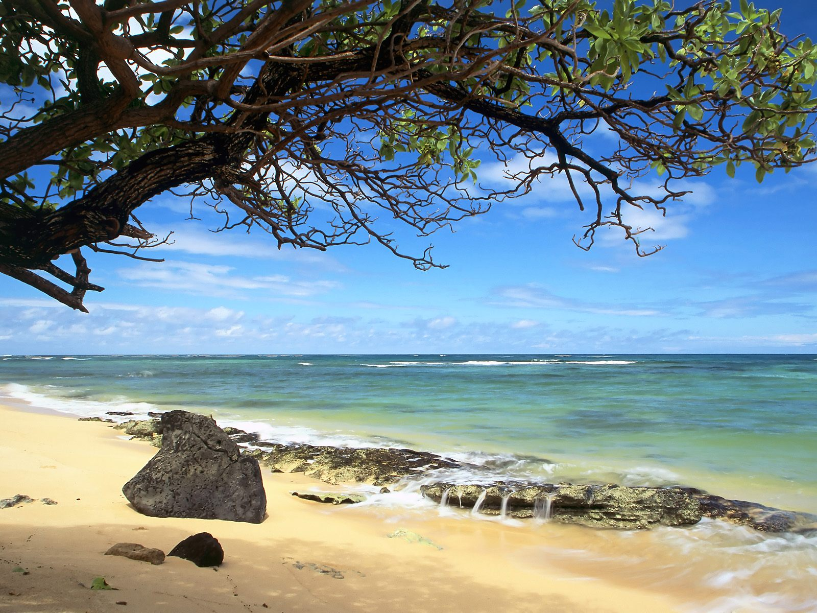 uk kanenelu beach oahu hawaii nature wallpaper image featuring beaches 1600x1200