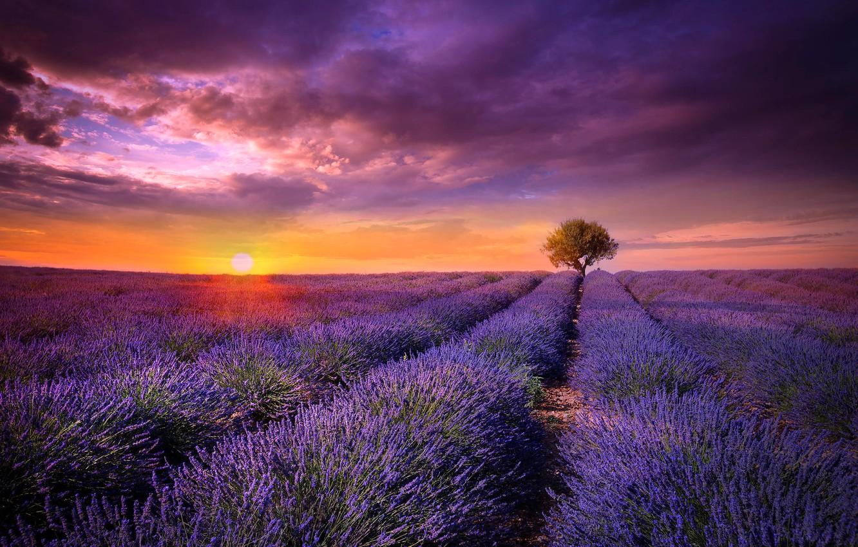 Wallpaper field the sun sunset flowers tree France lavender 1332x850