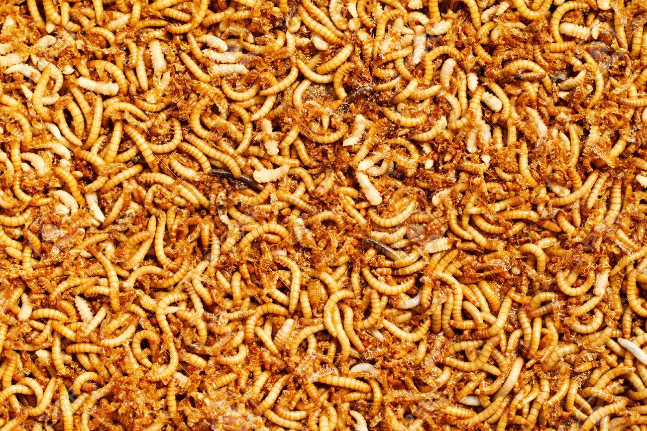 Many Ugly Worms As Background Stock Photo Picture And Royalty 1300x866