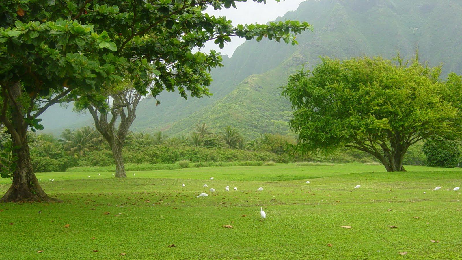 Free Download Jaspreet Rekhi 20 Amazing Nature Full Hd